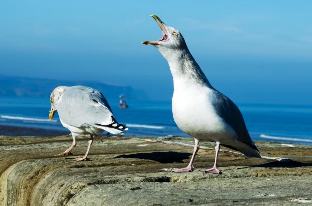 seagull_209239
